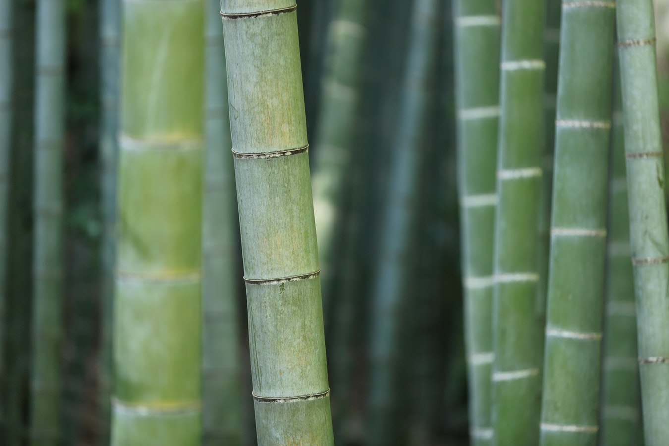 Eco Friendly Bamboo Fibre