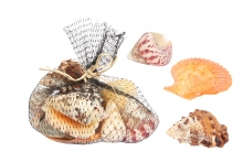 Shells Assortment - Large, in Gift Net