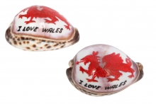 Welsh Dragon Cowry Shell