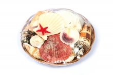 Shells In Basket - 15cm